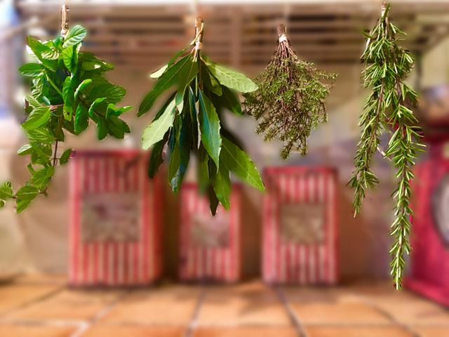 plantes séchées pour tisanes phytothérapie