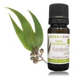 huile essentielle eucalyptus smithii