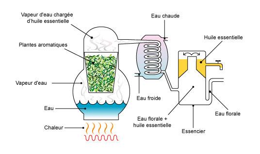 distillation-huiles-essentielles-fleur d'oranger
